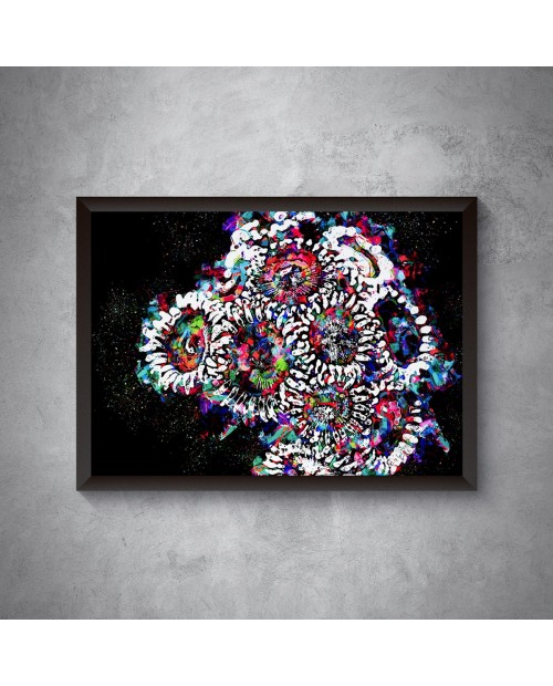 Rainbow Zoa – plakat