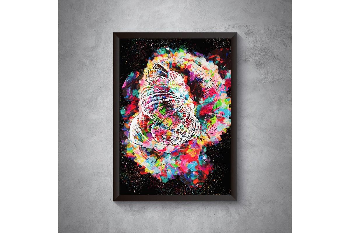 Rainbow Goni – plakat