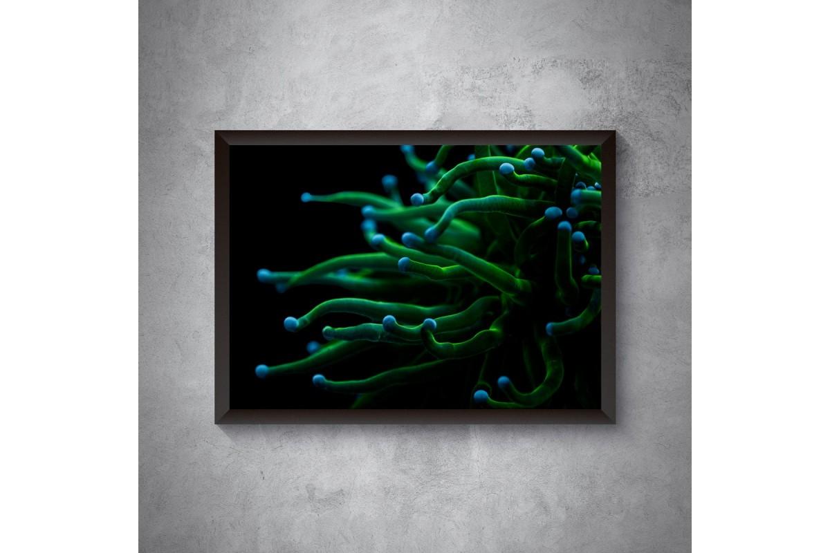 Koralowiec Euphyllia – plakat