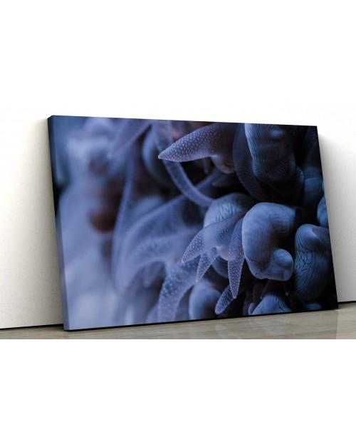 Koralowiec morski - fotoobraz na płótnie