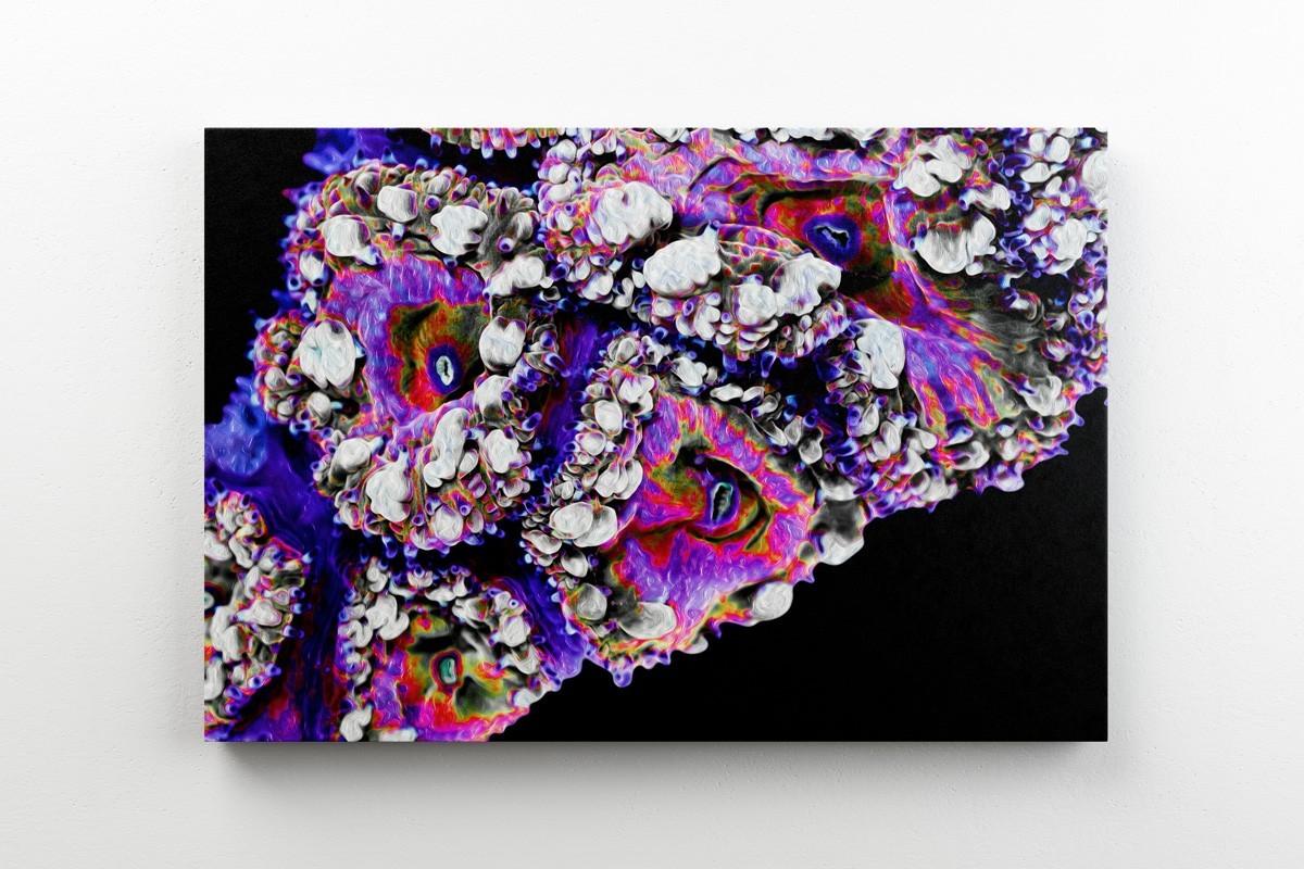 Obrazy-abstrakcja-koralowce
