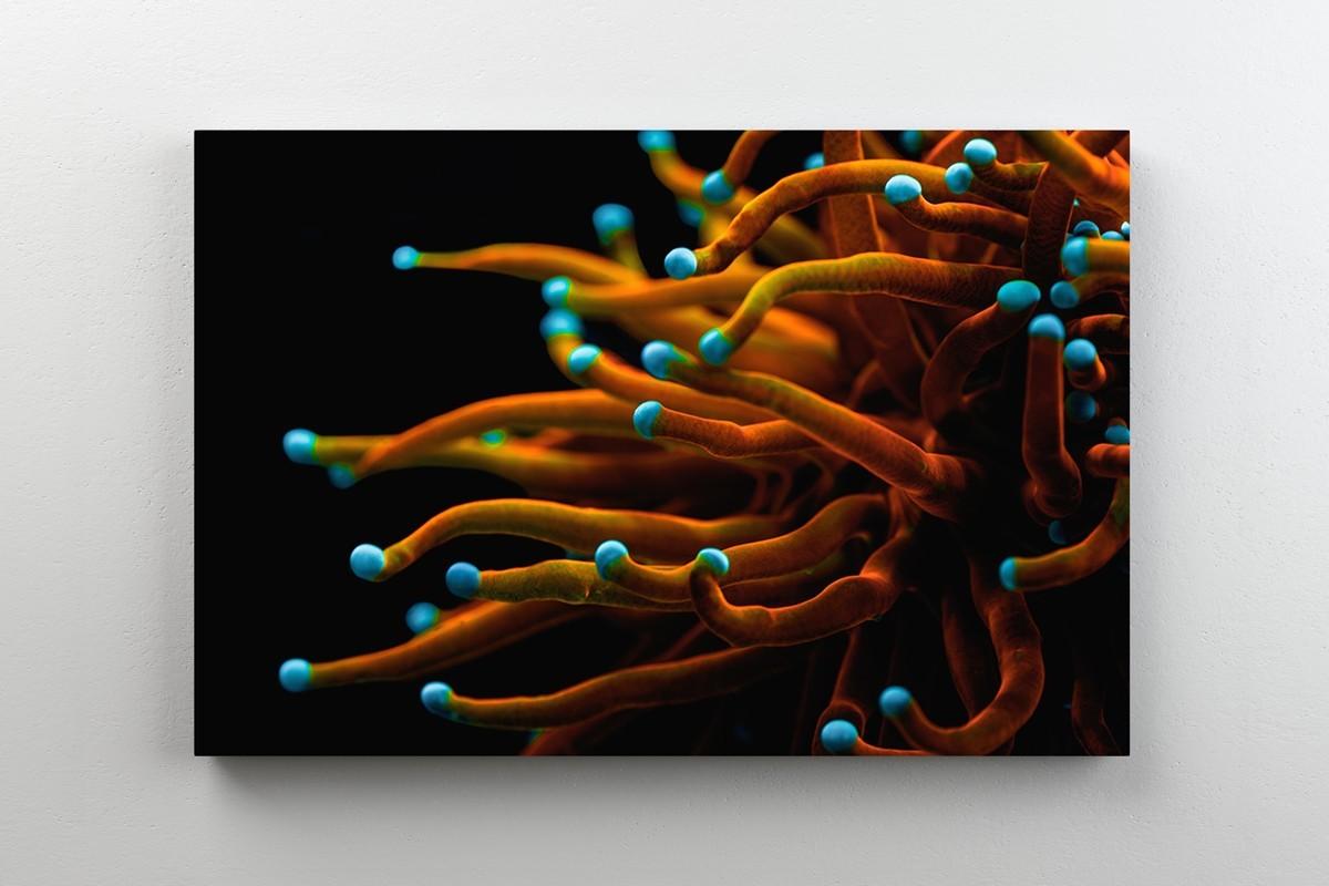 Fotoobraz koralowca morskiego
