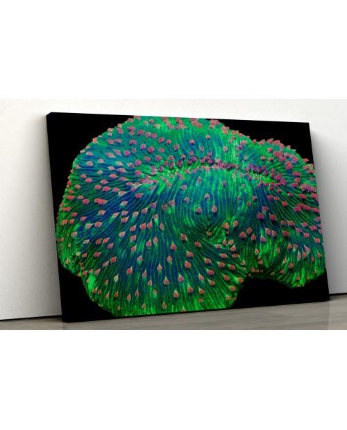 Fungia sea coral - Photo image printed on canvas