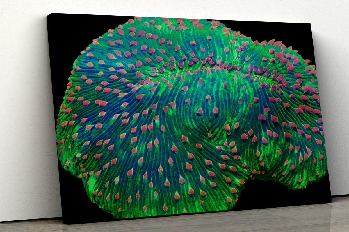 obraz-koralowce