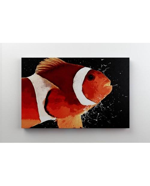 Clownfish - Buffoon